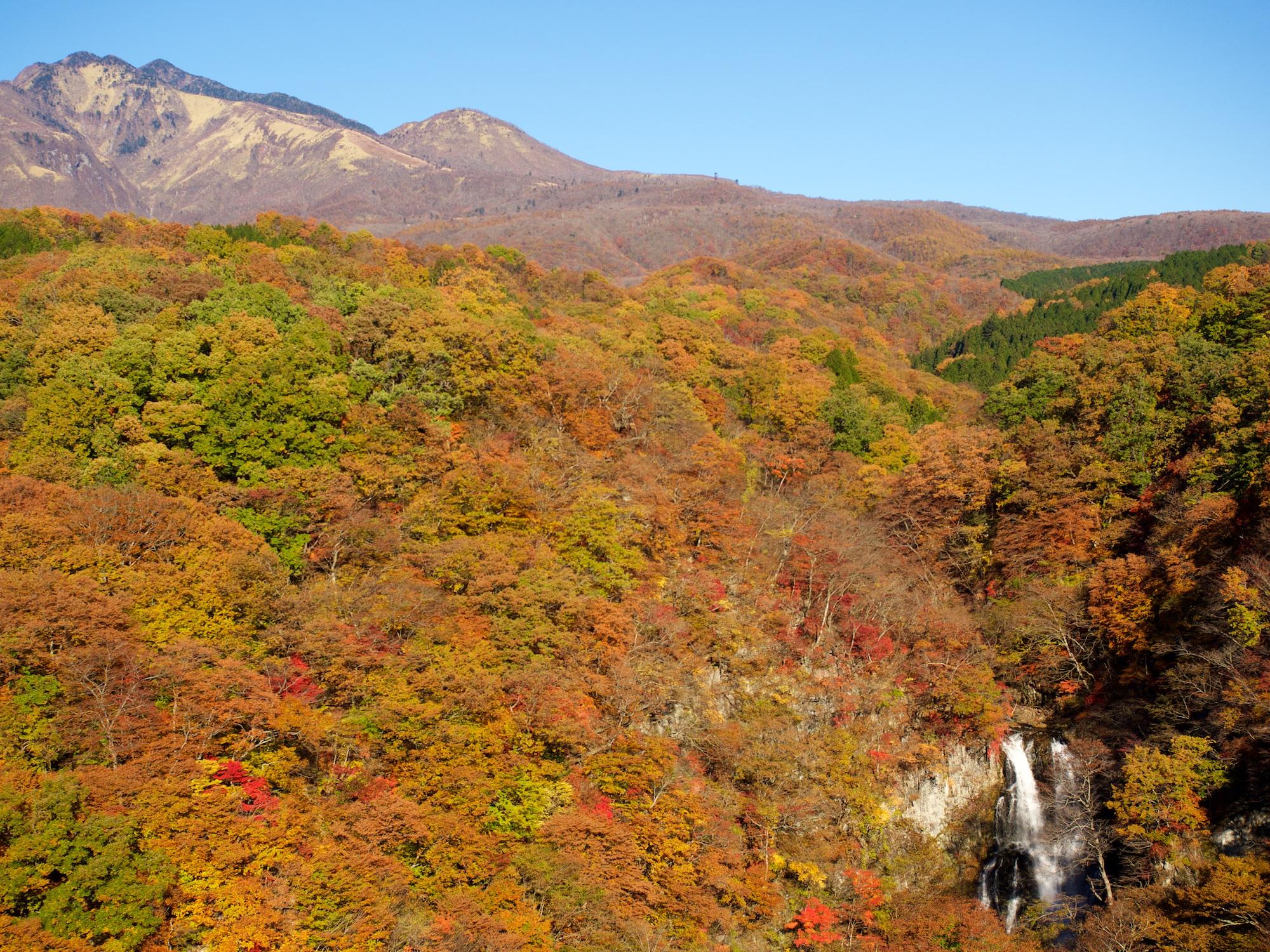 Herbstwald Nikko
