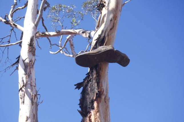 Shoes on a tree